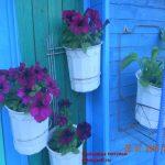 цветы Петуньи