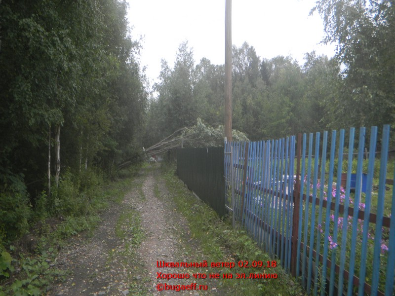 повал деревьев